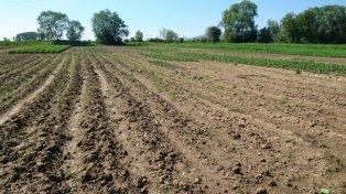 Биопроизводителите ще получат €40 млн.